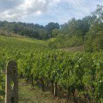 Cotarella Family Buys Le Macioche in Montalcino